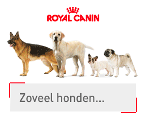 Royal Canin - 300x250