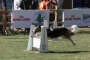 Over Flyballcompetitie.nl