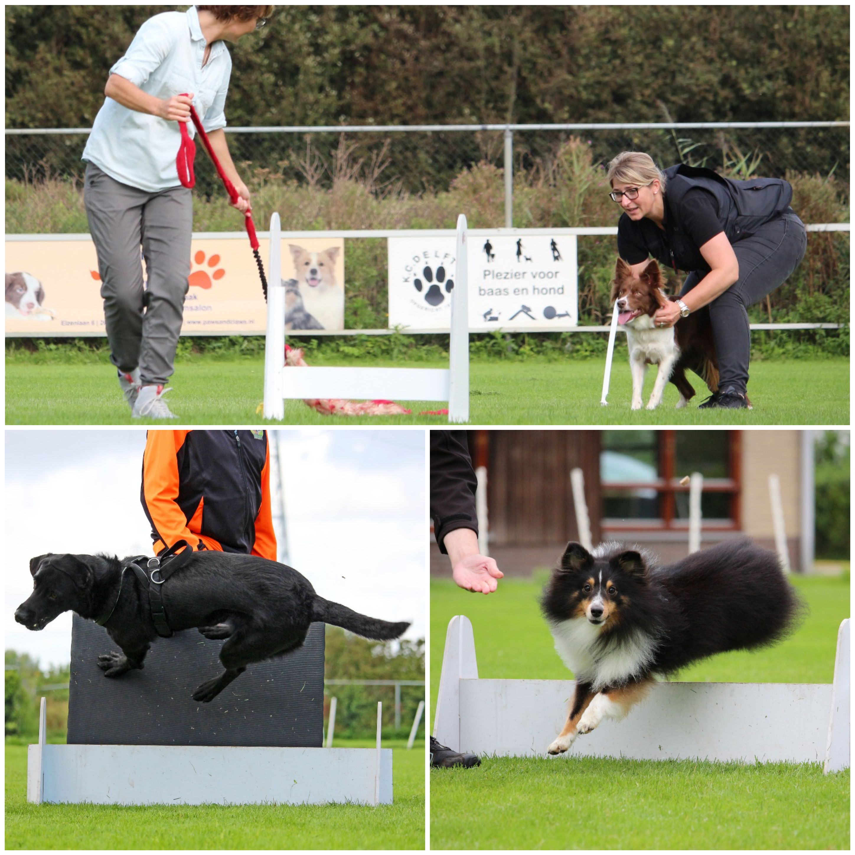 Workshop FCI Flyball